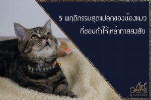 5 พฤติกรรมสุดแปลกของน้องแมวที่ชอบทำให้เหล่าทาสสงสัย