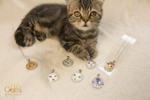 คำสารภาพของ 'ทาสแมว' อดใจไม่ไหว ทำไมต้องมี 'Cats Collection'