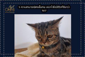 5 ความสามารถพิเศษขั้นเทพ ของเจ้าสิ่งมีชีวิตที่เรียกว่า 'แมว'
